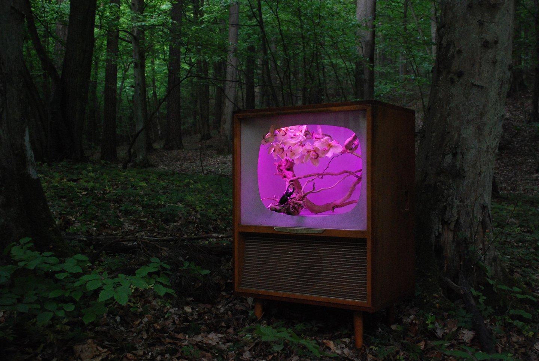 Dziwne skutki awarii telewizora